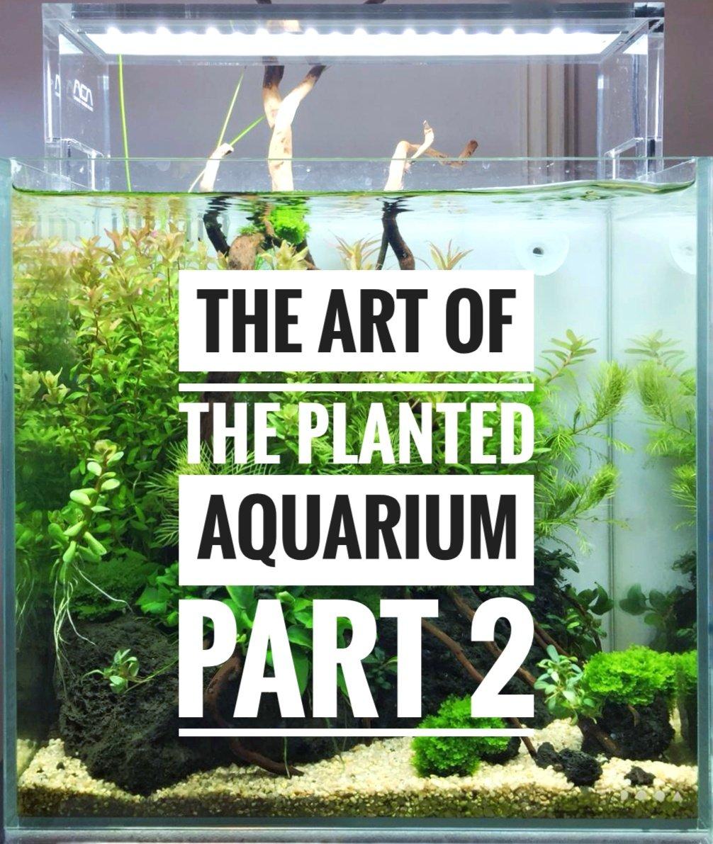 The Art of the Planted Aquarium 2019 – Erlebnisbericht (Part 2)